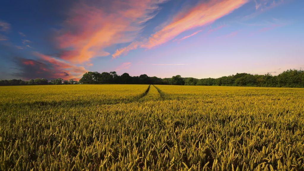 チャットボットで「見える化」?IT化が進む農業の未来|AI・人工知能製品・サービス・ソリューション・プロダクト・ツールの比較一覧・導入活用事例・資料請求が無料でできるメディア
