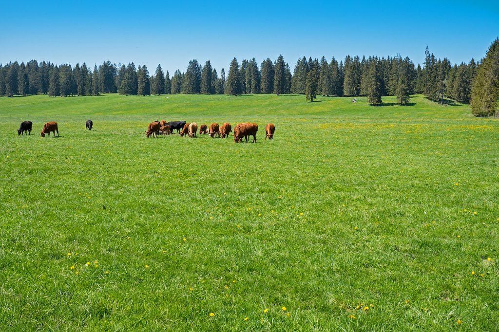 行動から状態予測!畜産業におけるIoTの活用事例と将来の可能性|人工知能を搭載した製品・サービスの比較一覧・導入活用事例・資料請求が無料でできるAIポータルメディア