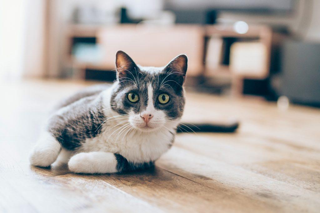 ●ディープラーニングによるパターン認識が証明された「Googleの猫」