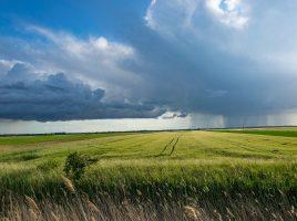 農業を変える!?収穫や仕分けを自動化するAIの仕組みとは?