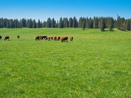 行動から状態予測!畜産業におけるIoTの活用事例と将来の可能性